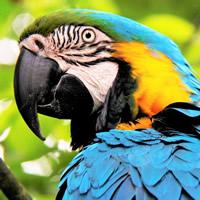Archie the Parrot